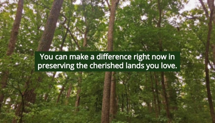 Trees-blur-make a difference.jpg